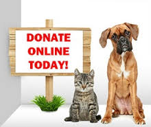 Online Donation